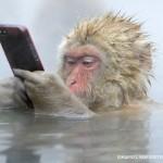 snow+monkey+iphone